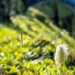 Mount Rainier National Park photos